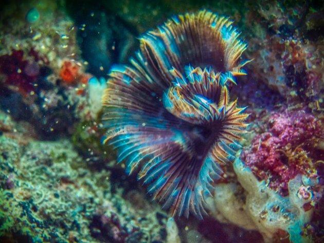 Het ontstaan van koraal