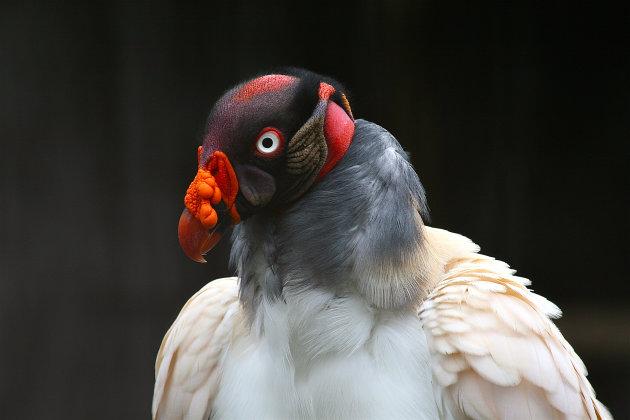 Een koninklijke vogel