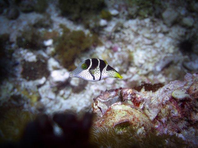 Een heel klein visje