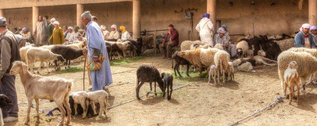 De beestenmarkt van Rissani