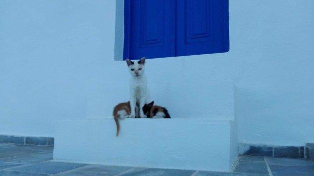 Katten op Sifnos
