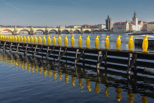 Pinguins in Praag