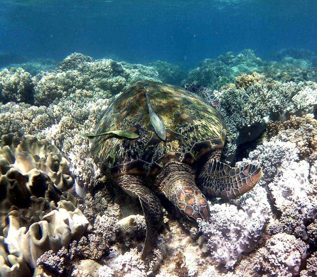 enorme schildpadden op Apo