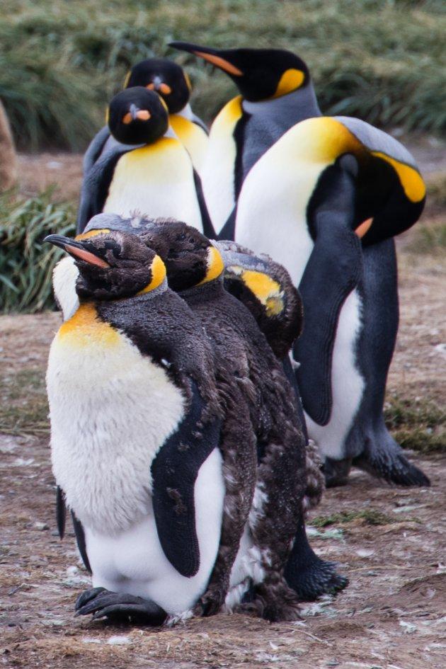 25 april: Wereld Pinguïn dag