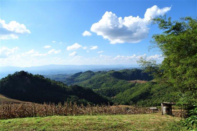 Maisveld op een bergtop.