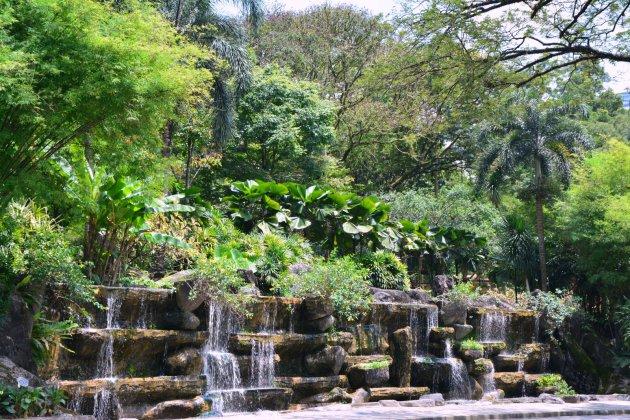 Botanische tuin KL