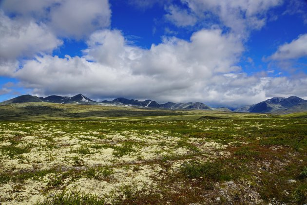 Rendiermos in Rondane