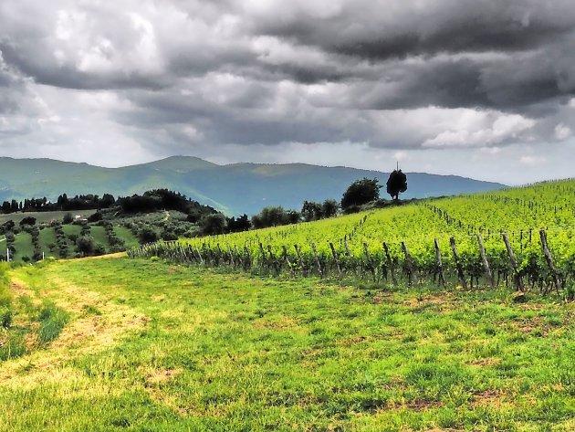 Donker Toscane