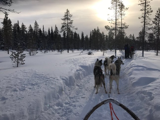 Huskytocht Finland