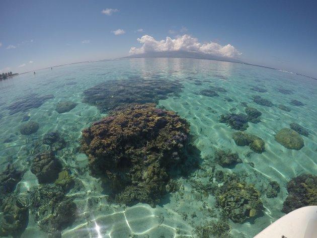 Snorkelen, SU-Paddling, Duiken