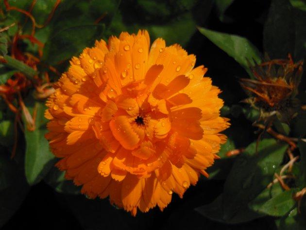 Een bloem in de tuinen van Alhambra
