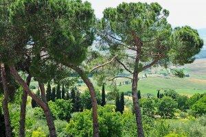 Groen Toscane