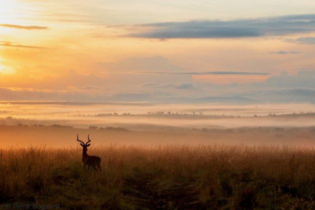 Mist over de savanne van de Masai Mara bij zonsopkomst