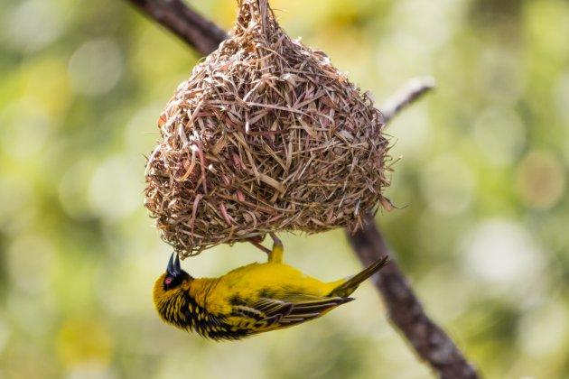 Swaziland, een vogelparadijs.
