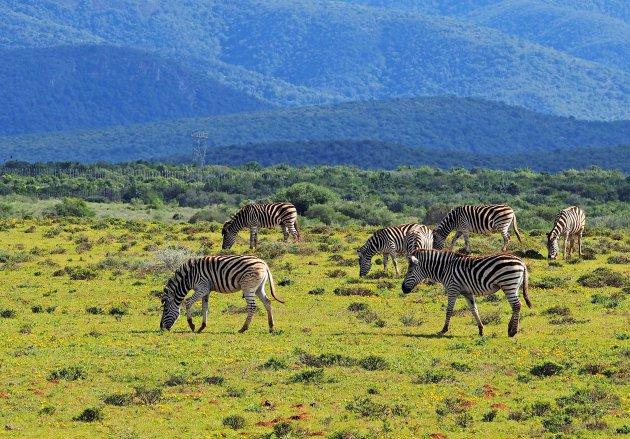 Op en top Afrika