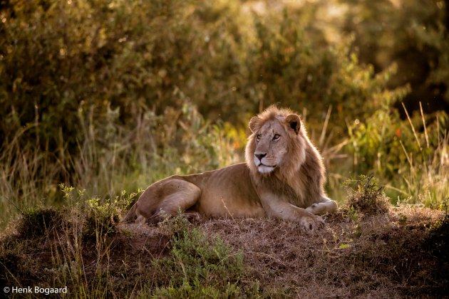 Jonge koning in de ochtendzon