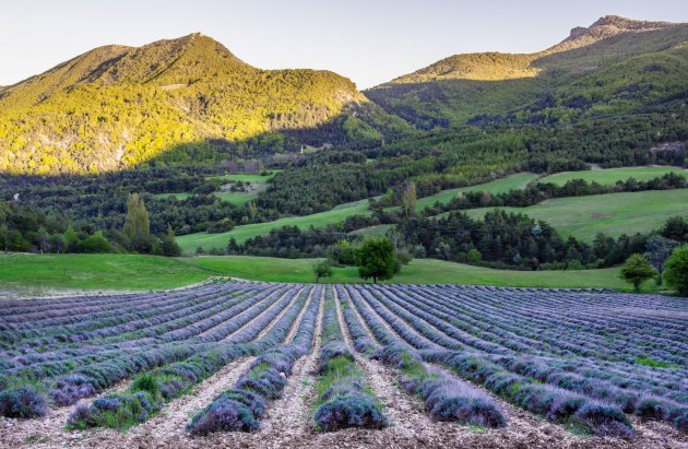 Paarse gloed in de voorlopers van de Alpen