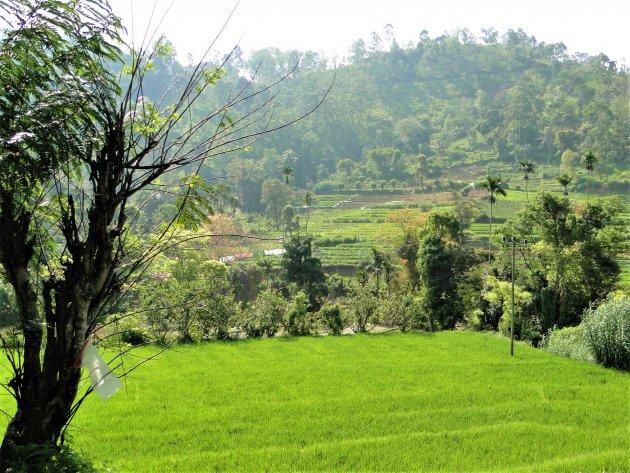 Rijstveldjes in de bergen..