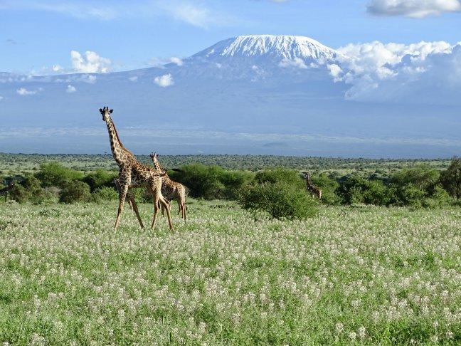 Kilimanjaro en wildlife