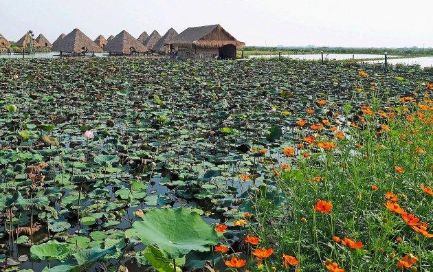 Het grote meer (Tonle Sap)