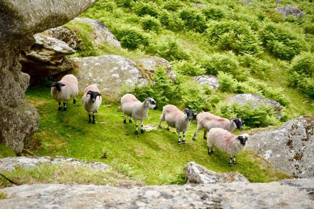 Wandelen in Dartmoor NP