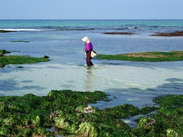 Seafood zoeken in Jeju