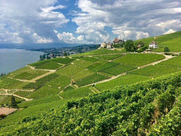 Lavaux, het wijngebied bij Lausanne