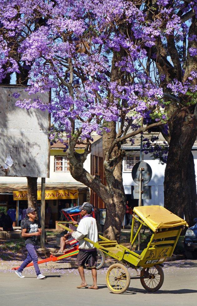Vier de lente in Antsirabe
