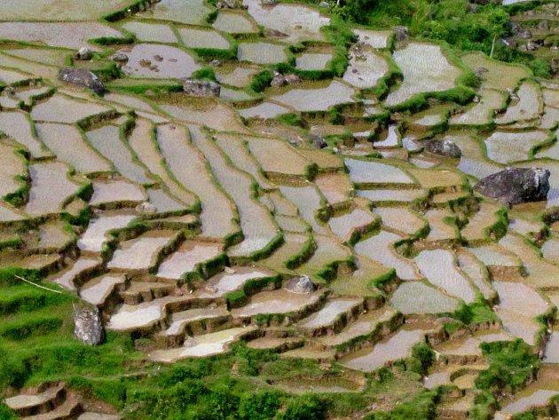 1000 rijstterrassen