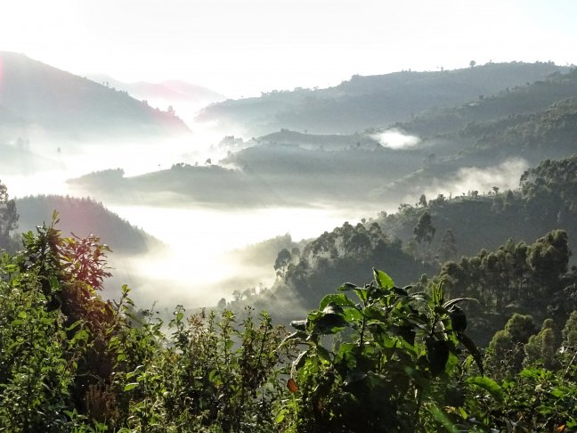 Mzungu in the mist
