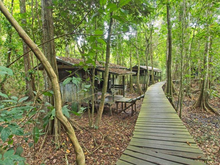 1 maand backpacken in Maleisië: Kinabatangan rivier, Uncle Tan Jungle Camp