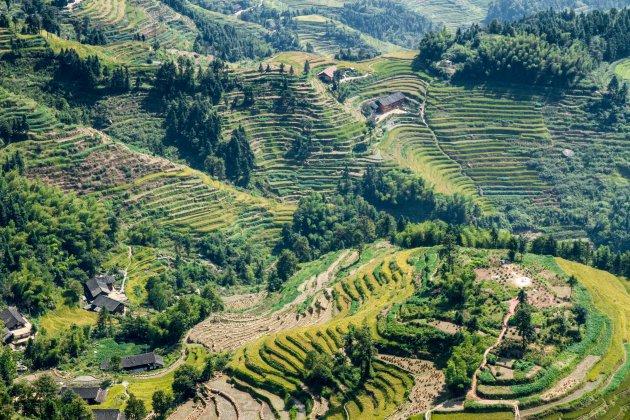 De rijstvelden van China