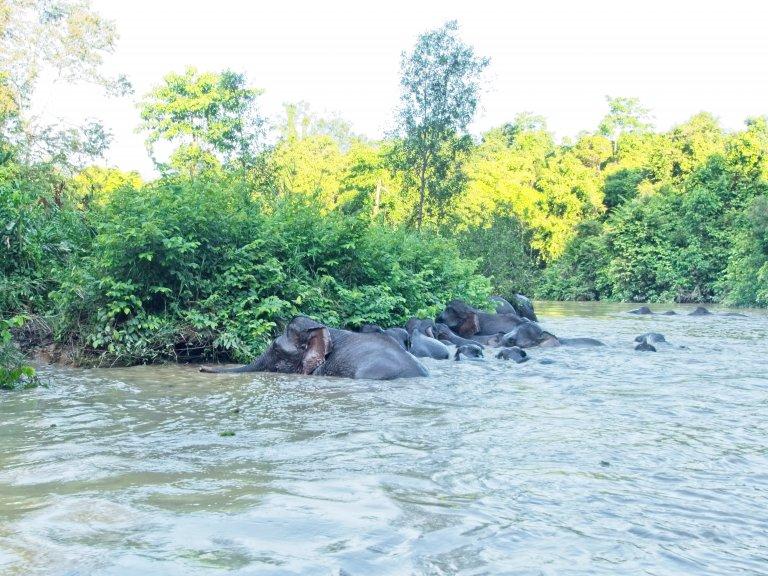 Hoofdfoto bij reisverhaal '1 maand backpacken in Maleisië: Kinabatangan rivier, Greenview.'