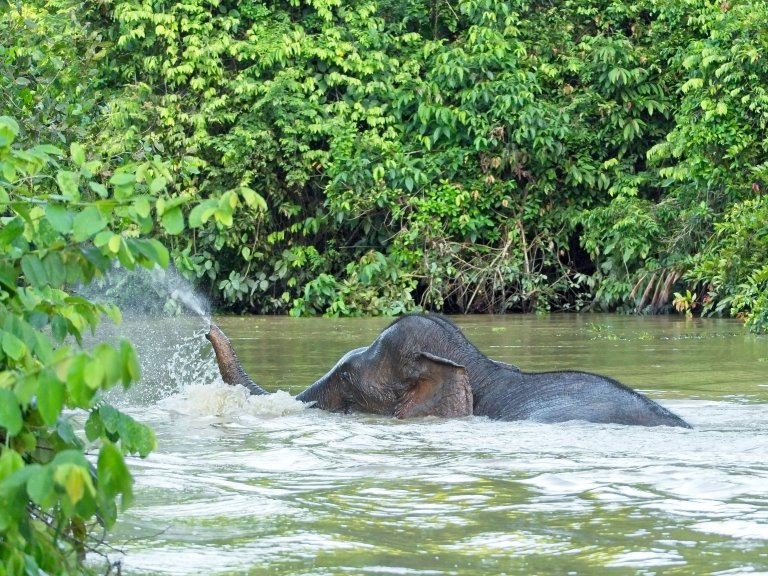 1 maand backpacken in Maleisië: rivier, Greenview.