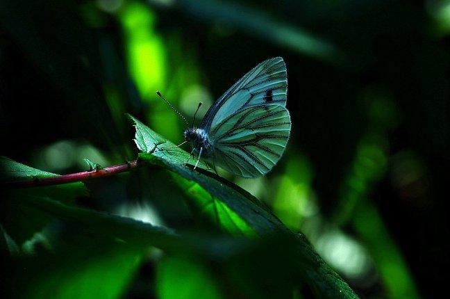 Vlindertje !