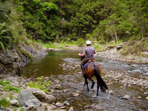 Te Urawera te paard
