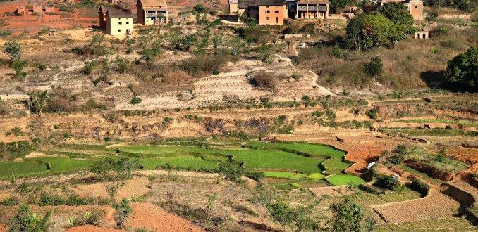 Betsileoland, rijst of aardappelland?