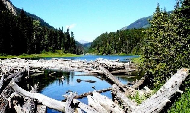 Bossen, bergen, en meren.