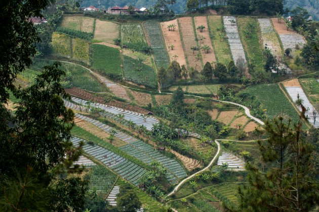 Wandelen tussen de akkers van Oost-Java