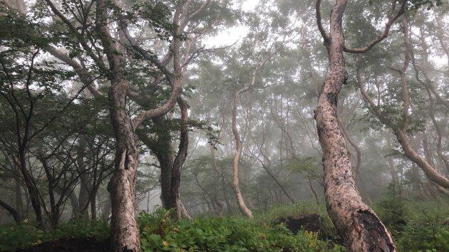 Japans bos