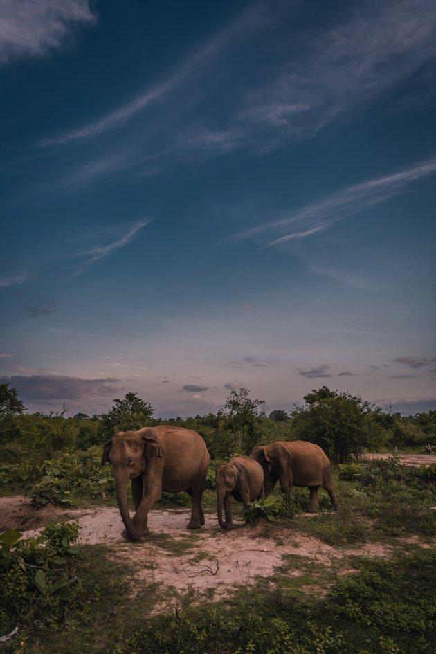 Een safari? die doe je met zonsopgang!