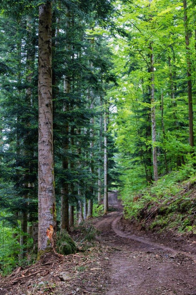 De bossen van de Elzas