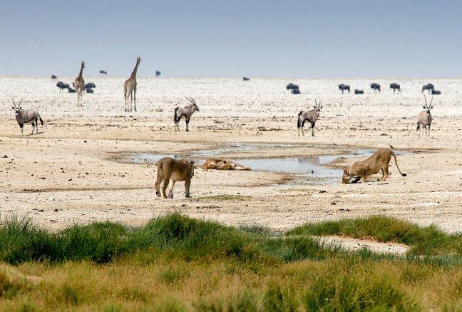 De waterplaatsen van Etosha