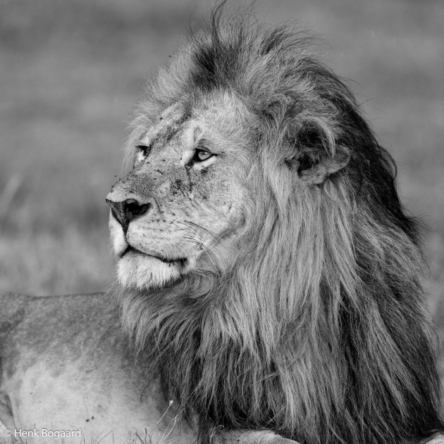 De Koning - Niet storen svp