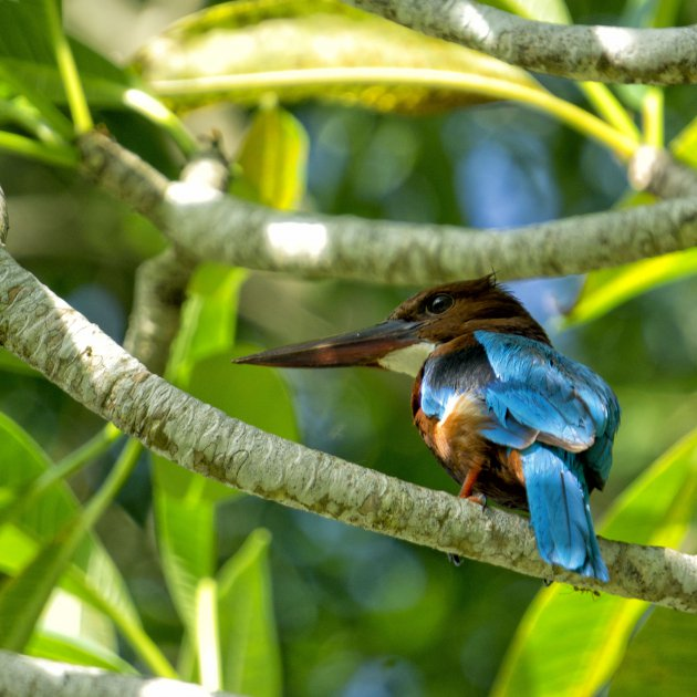 Kingfisher Sri Lanka