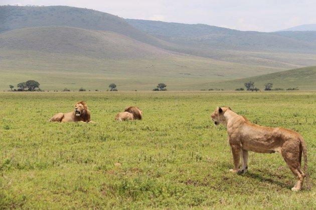 Leeuwen NgoroNgoro krater