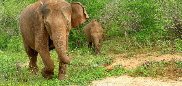 Safariparken streep je hier van je bucketlist!
