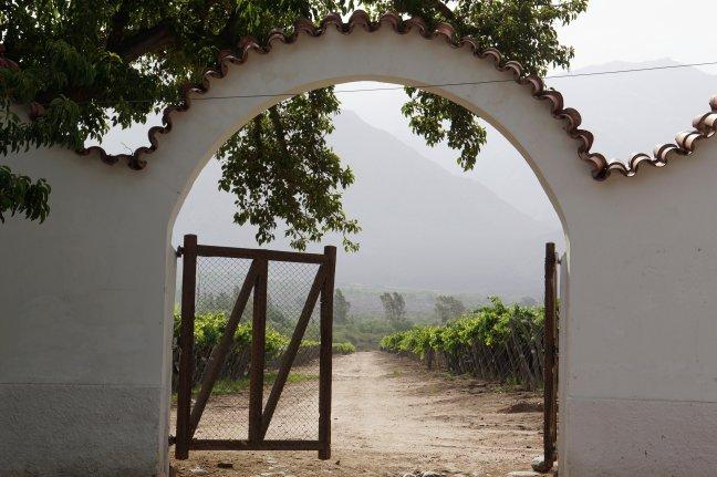 De goddelijke Torrontés-druif