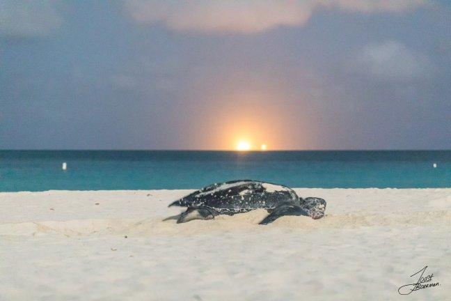 Schildpadden kijken.