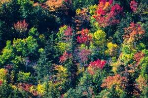 Herfst in de USA